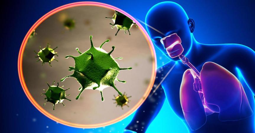 NOTÍCIA | Pandemia: Encontrado em porcos na China novo vírus com 'potencial pandêmico'